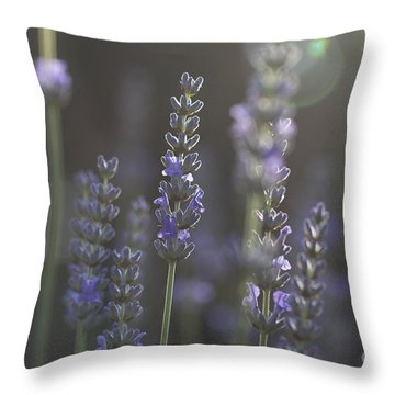 Lavender Flare. Throw Pillow by Clare Bambers