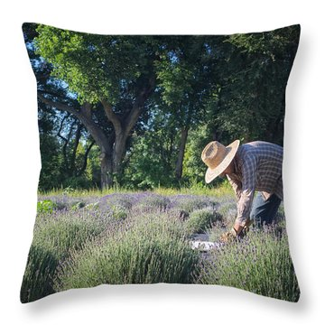 Lavender Harvest Throw Pillow