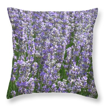 Throw Pillow featuring the photograph Lavender Hues by Pema Hou