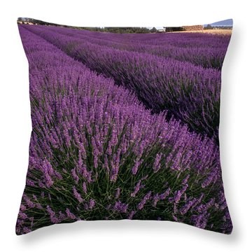 Lavender In Provence Throw Pillow