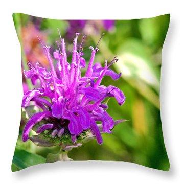 Throw Pillow featuring the photograph Lavender Pink Bee Balm Wild Bergamot by Karon Melillo DeVega