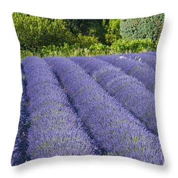 Lavender Rows Throw Pillow by Bob Phillips