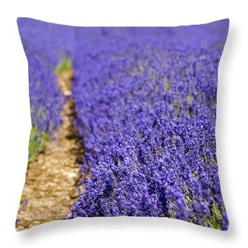 Lavender's Blue Throw Pillow by Anne Gilbert