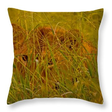 Throw Pillow featuring the photograph Laying In The Grass by J L Woody Wooden