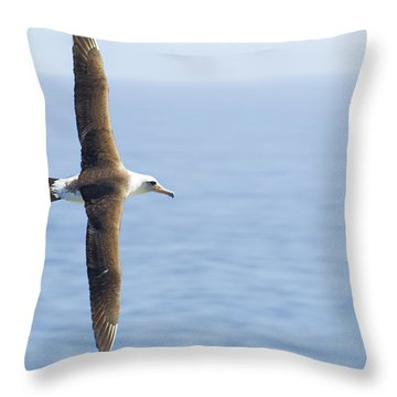Throw Pillow featuring the photograph Laysan Albatross No 1 - Kilauea - Kauai - Hawaii by Belinda Greb
