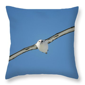 Laysan Albatross Soaring Hawaii Throw Pillow by Tui De Roy