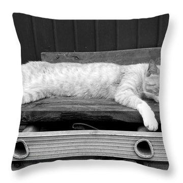 Lazy Cat Throw Pillow by Andrea Anderegg