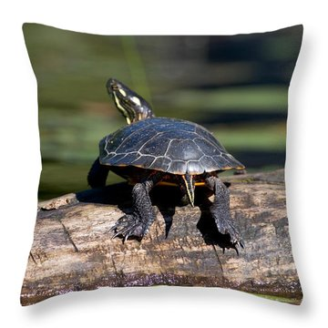 Lazy Day On A Log 6241 Throw Pillow by Brent L Ander