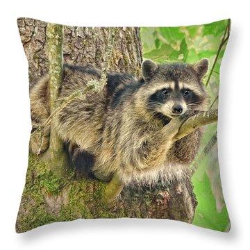 Lazy Day Raccoon Throw Pillow