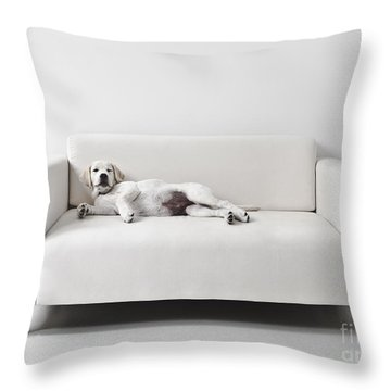Lazy Dog On The Sofa Throw Pillow by Diane Diederich