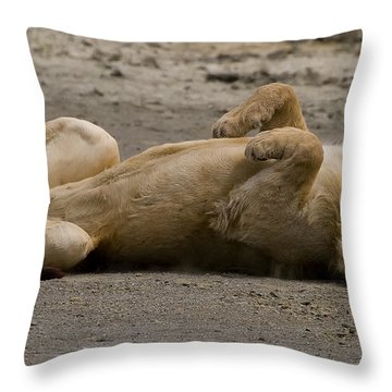 Throw Pillow featuring the photograph Lazy Lion by J L Woody Wooden