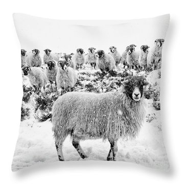 Leader Of The Flock Throw Pillow