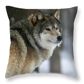 Leader Of The Pack Throw Pillow by Inspired Nature Photography Fine Art Photography