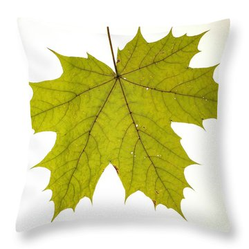 Throw Pillow featuring the photograph Leaf 1 by Mariusz Czajkowski