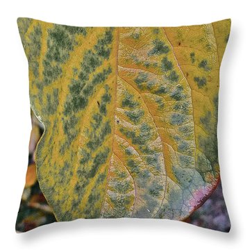 Throw Pillow featuring the photograph Leaf After Rain by Bill Owen