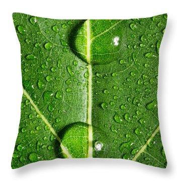 Leaf Dew Drop Number 10 Throw Pillow by Steve Gadomski