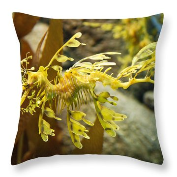 Throw Pillow featuring the photograph Leafy Sea Dragon by Shane Kelly