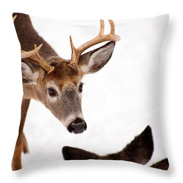 Learning A Lesson Throw Pillow by Karol Livote