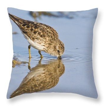 Least Sandpiper With A Reflection  Throw Pillow