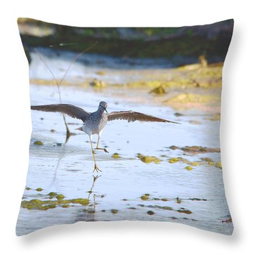 Least Sandpiper Water Landing Throw Pillow