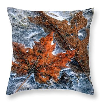 Throw Pillow featuring the photograph Leaves Frozen In Puddle by Janice Drew