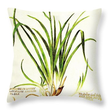 Throw Pillow featuring the drawing Lemon Daylily Botanical by Rose Santuci-Sofranko