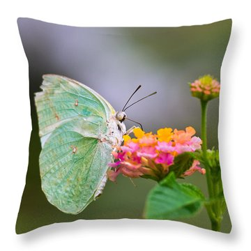 Lemon Emigrant Butterfly Throw Pillow by Scott Carruthers