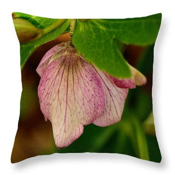 Throw Pillow featuring the photograph Lenton Rose Of Winter by Larry Bishop