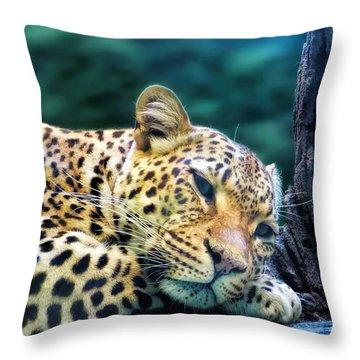 Throw Pillow featuring the photograph Leopard 1 by Dawn Eshelman