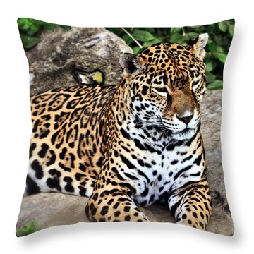 Leopard At Rest Throw Pillow by Marty Koch