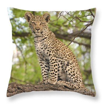 Leopard Cub Gaze Throw Pillow by Tom Wurl