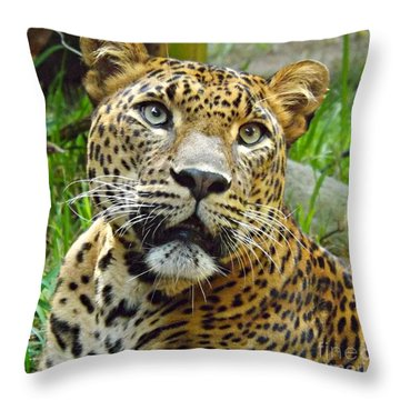 Leopard Face Throw Pillow