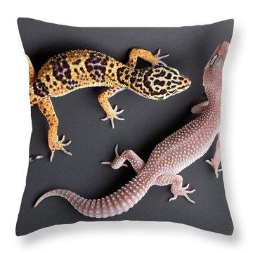 Leopard Gecko E. Macularius Collection Throw Pillow