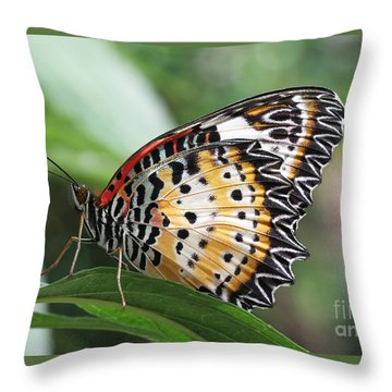 Leopard Lacewing Butterfly Throw Pillow by Judy Whitton