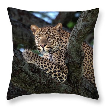 Leopard Male In A Tree In The Serengeti Throw Pillow by Maggy Meyer