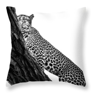 Leopard On Watch Throw Pillow