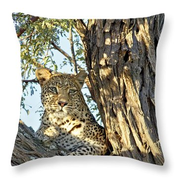 Leopard Portrait IIi Throw Pillow