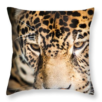 Leopard Resting Throw Pillow