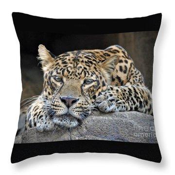 Throw Pillow featuring the photograph Leopard by Savannah Gibbs