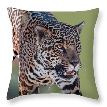 Jaguar Walking Portrait Throw Pillow