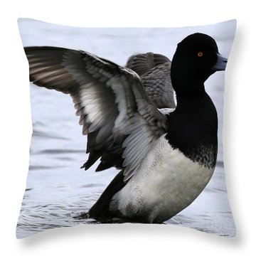 Lesser Scaup Duck  Throw Pillow