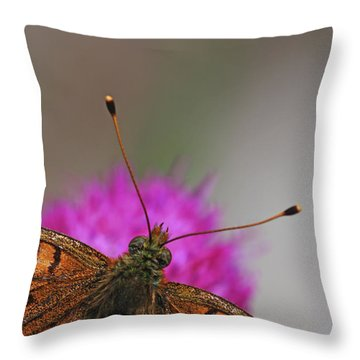 Lesser Spotted Fritillary Throw Pillow by Amos Dor