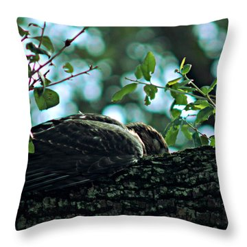 Let Sleeping Hawks Lie Throw Pillow