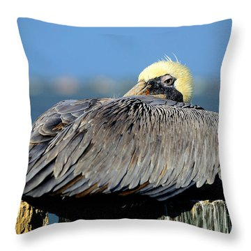 Let Sleeping Pelicans Lie Throw Pillow