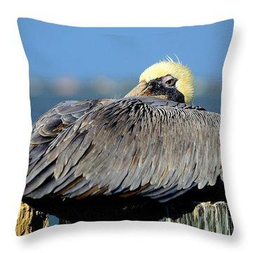 Let Sleeping Pelicans Lie Throw Pillow