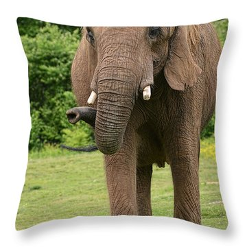 Let's Take A Walk Throw Pillow