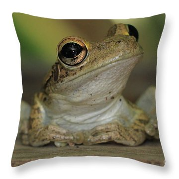 Let's Talk - Cuban Treefrog Throw Pillow