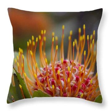 Leucospermum Pincushion Protea - Tropical Sunburst Throw Pillow by Sharon Mau