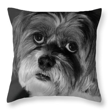 Lhasa Puppy Cut Throw Pillow by Arthur Fix