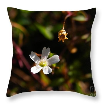 Throw Pillow featuring the photograph Life And Death by Agnieszka Ledwon